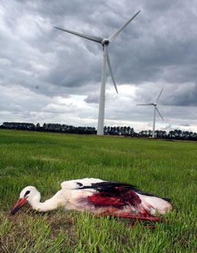 Vom Windrad getöteter Storch